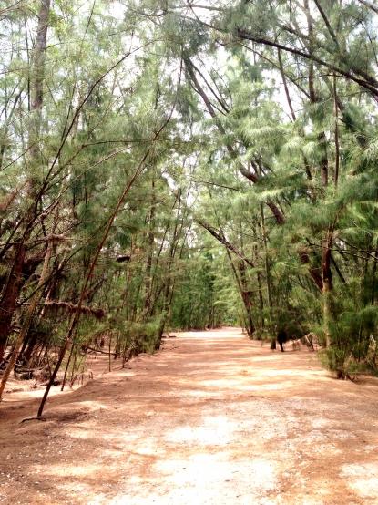 MB Trails